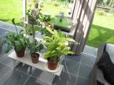 Escalier plantes